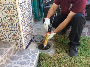 tratamiento cucaracha oriental